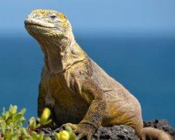 Crociera Legend  Galapagos itinerario A